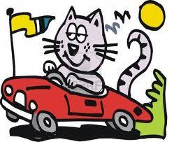 car_cat